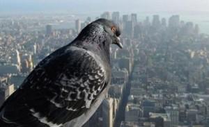 Put-oko-sveta-iz-pticije-perspektive-1